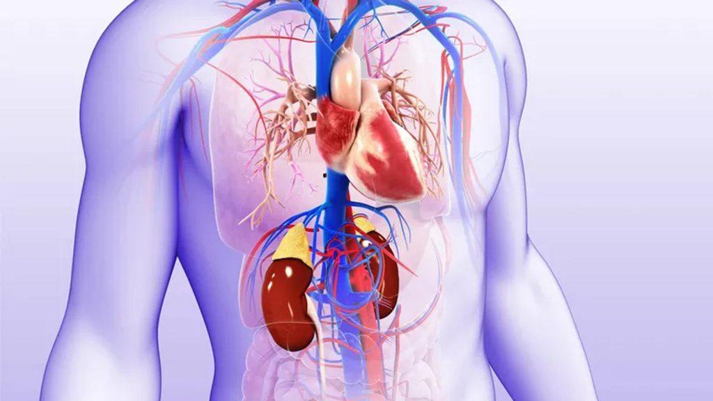 ارتباط بین بیماری قلبی و کلیوی