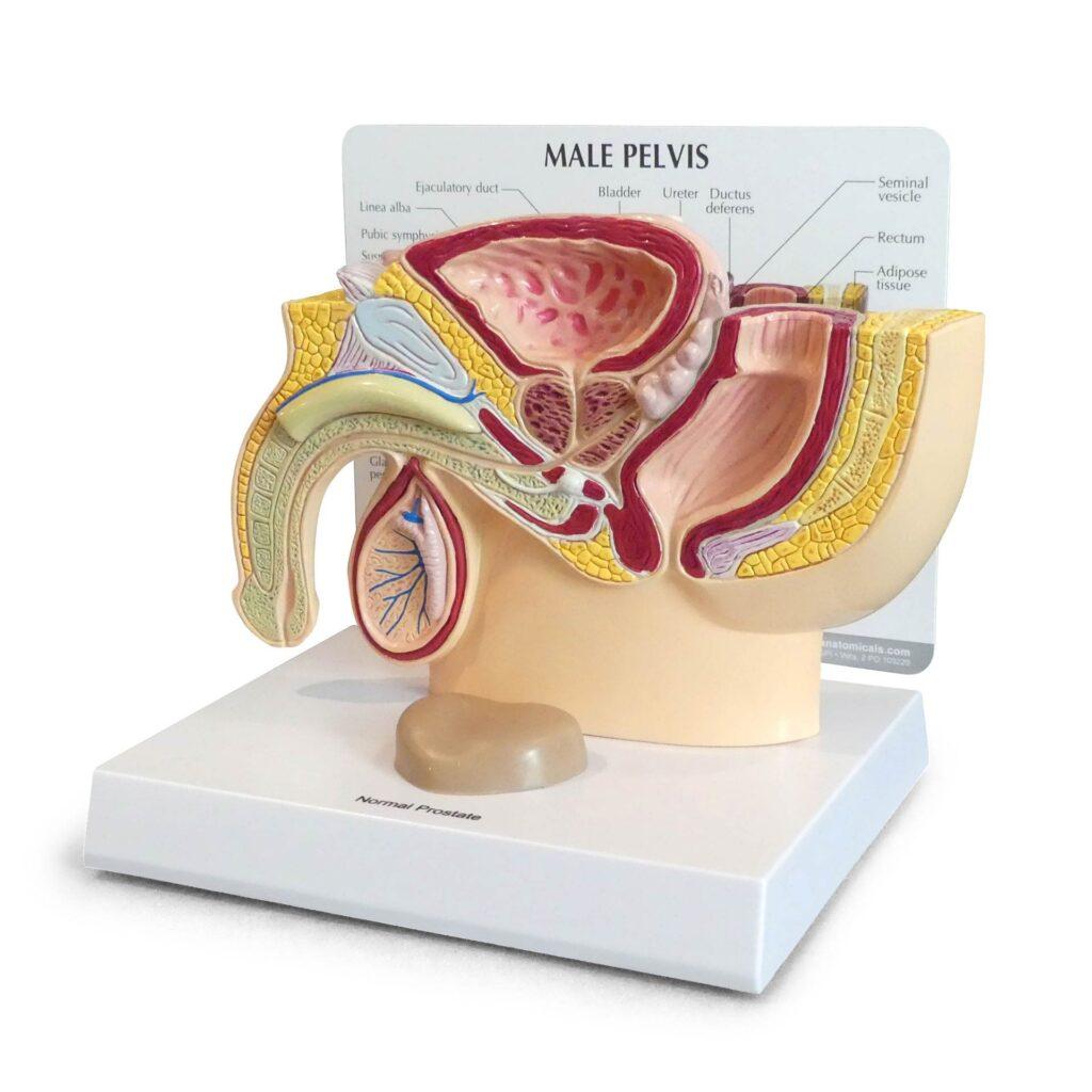 درمان پروستاتیت
